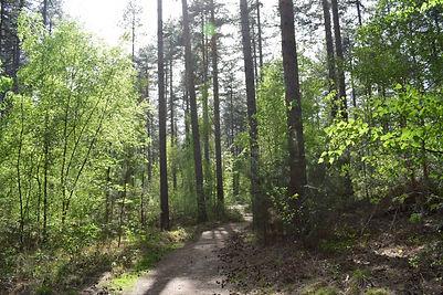 de weg in het bos.jpg