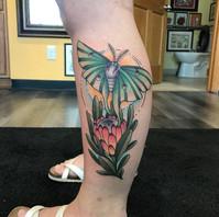 Luna Moth by Kayla