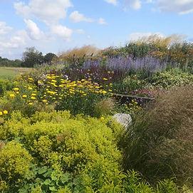 Dry garden herbacous planting