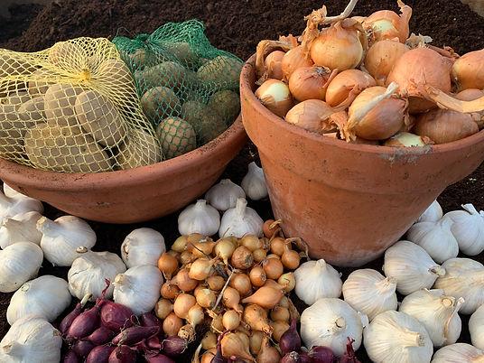 Bardfield Garden Centre Root Vegetables