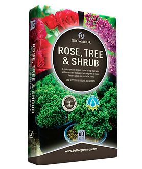 Rose Tree Shrub 60L