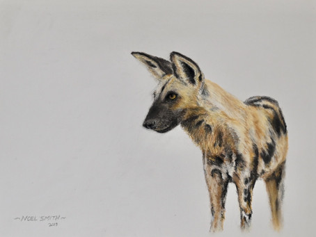 progression of a Painted dog