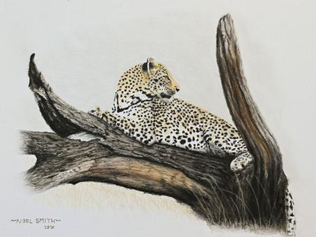 Sabi Sands Leopard Completed At Last