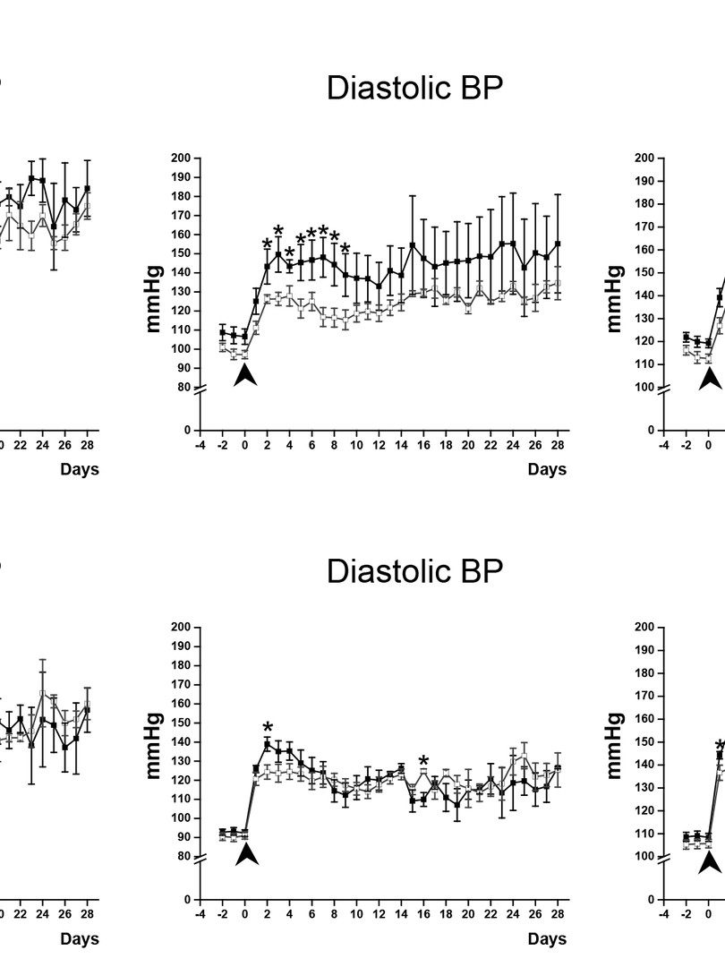 Loss of ADAM17 in smooth muscle cells transiently suppresses Ang II-induced blood pressure increased in mice. (Shen et al., Journal of Molecular and Cellular Cardiology, 2017.)