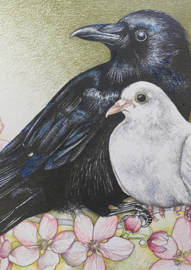 The Crow and the Dove