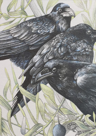 Part of my 52 Crows project, where I invited authors to send me a short story (600 words) once a week for me to illustrate. The theme for each story was either a crow or raven.   I'm hoping to develop this project into a book at a later date. If you would like further information please don't hesitate to contact me.   I will blog about the project as I continue to develop this website.