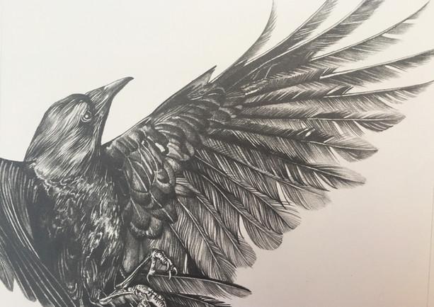 The Unfinished illustration