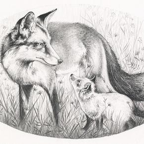 May Eve Vixen with cub
