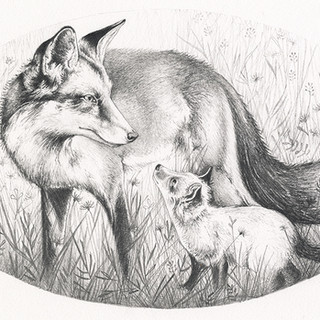 May Eve Vixen with cub
