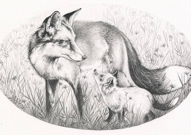 Red Fox Vixan and cub