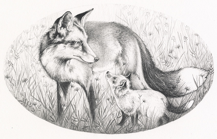 Red Fox Vixan and cub