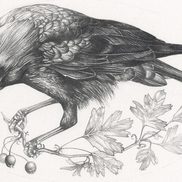 October Crow
