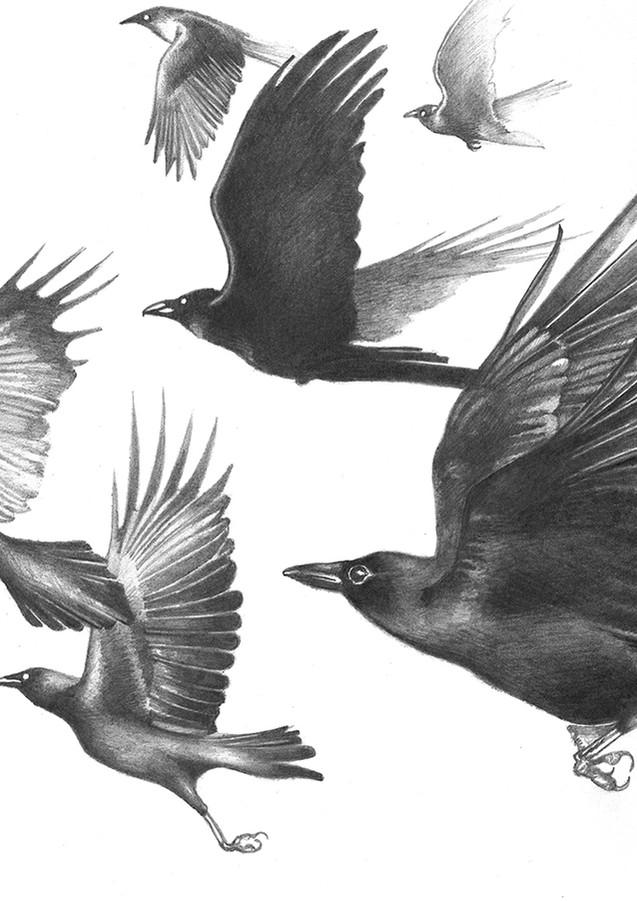 The Eternal Crow