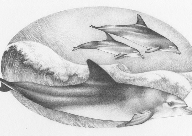 """An illustration from a book called """"The Blue Salt Road"""" written by the fab Joanne Harris.  Published by Orion  The great thing about this book was that it allowed me to draw lots of my favourite things like whales the dolphins.   The story is a re-telling of old english selkie myths, and is available in all good book shops."""
