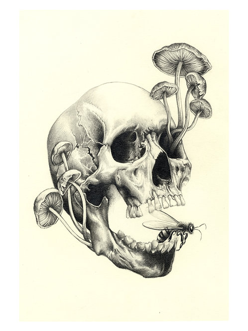 The Skull and Bee