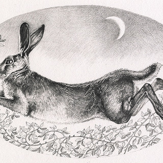 August Leaping Hare