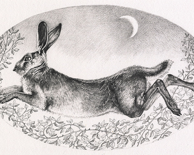 Brown Hare in Moonlight
