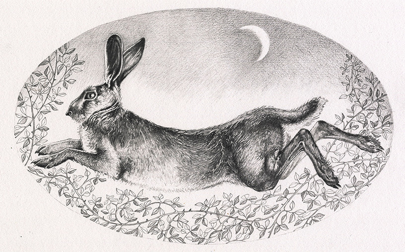 Brown Hare in Moonlight