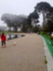 People exercising and walking a dog near Spreckels Lake in Golden Gate Park