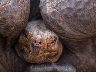 Les Galapagos - Premiers pas dans un autre réel sur l'Isla Santa Cruz