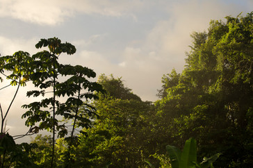 Morning Amazonia Peru Parque de Manu
