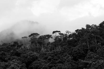 Paysage forêt Amazonienne Perou Parc de Manu