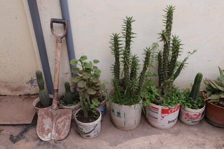 cactus and other plants peru