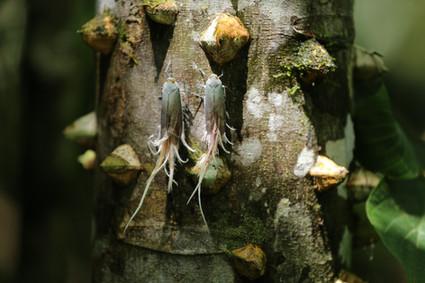 Weird insects Amazonia Peru Parque de Manu