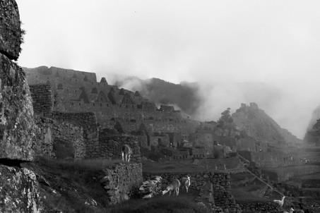 Foggy Machu Picchu Brumeux