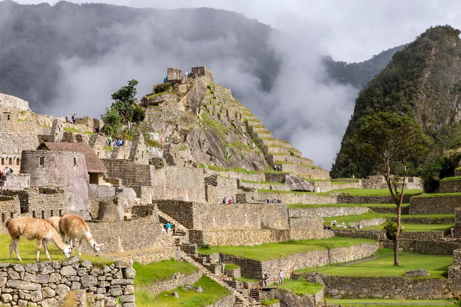 Lamas and Machu Picchu