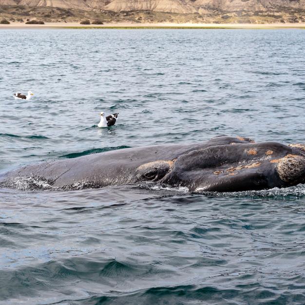 Dans l'oeil de la baleine