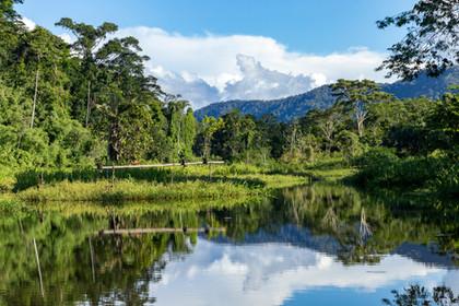 Amazonia Peru Parque de Manu