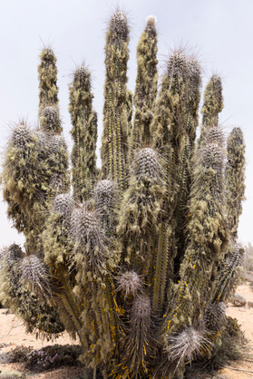 TOP 10 CHILI Pan de Azucar cactus
