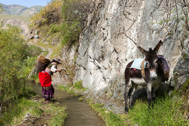 A stubborn donkey in the Colca Canyon