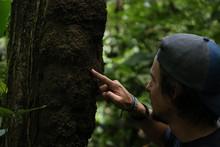Termite Amazonia Peru Parque de Manu