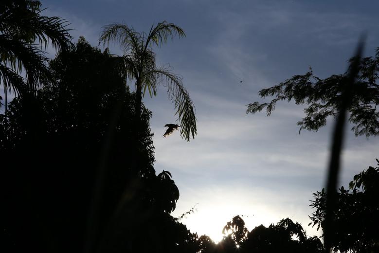 Night Amazonia Peru Parque de Manu