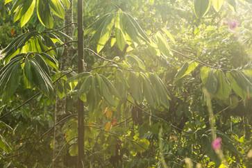 Rainy Morning Amazonia Peru Parque de Manu