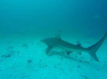 Les Galapagos - Plongez dans un autre monde à Seymour Norte