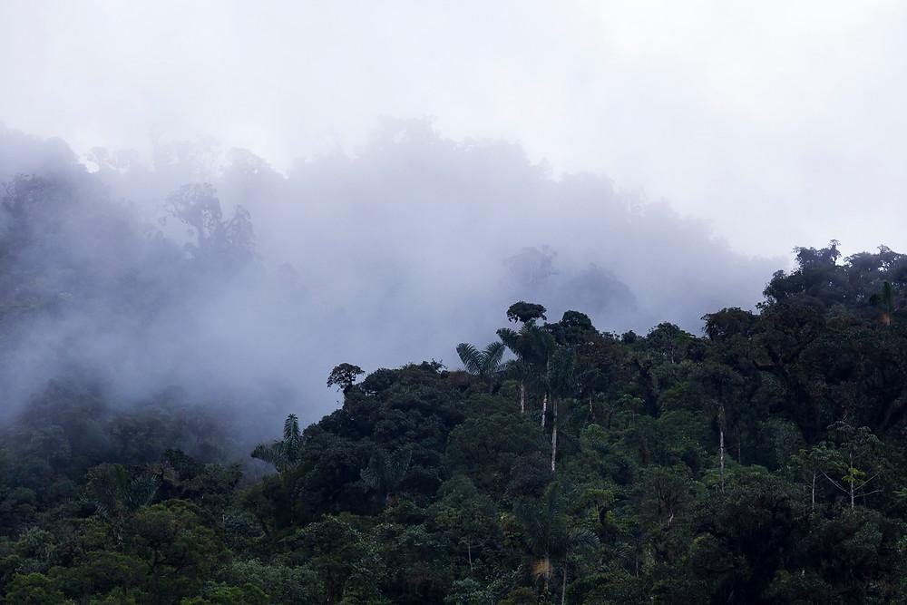 Cloudy Rainforest Amazonia Peru Parque de Manu