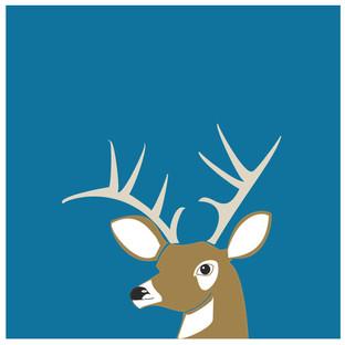 the confident deer