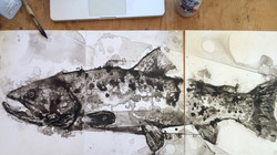 'trout' as work in progress