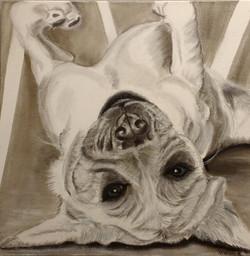 Hond  luieren