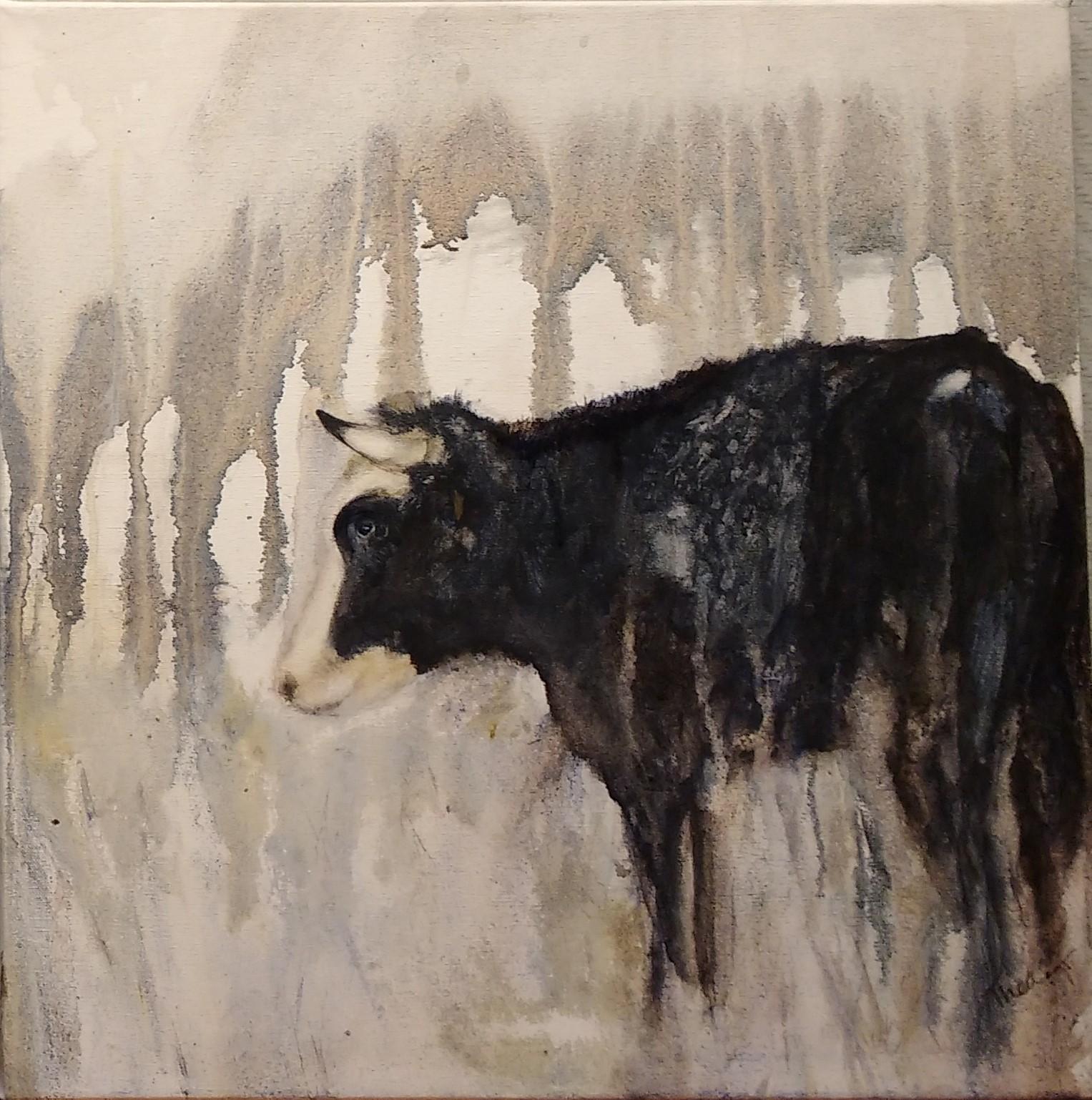 Blaarkop stier