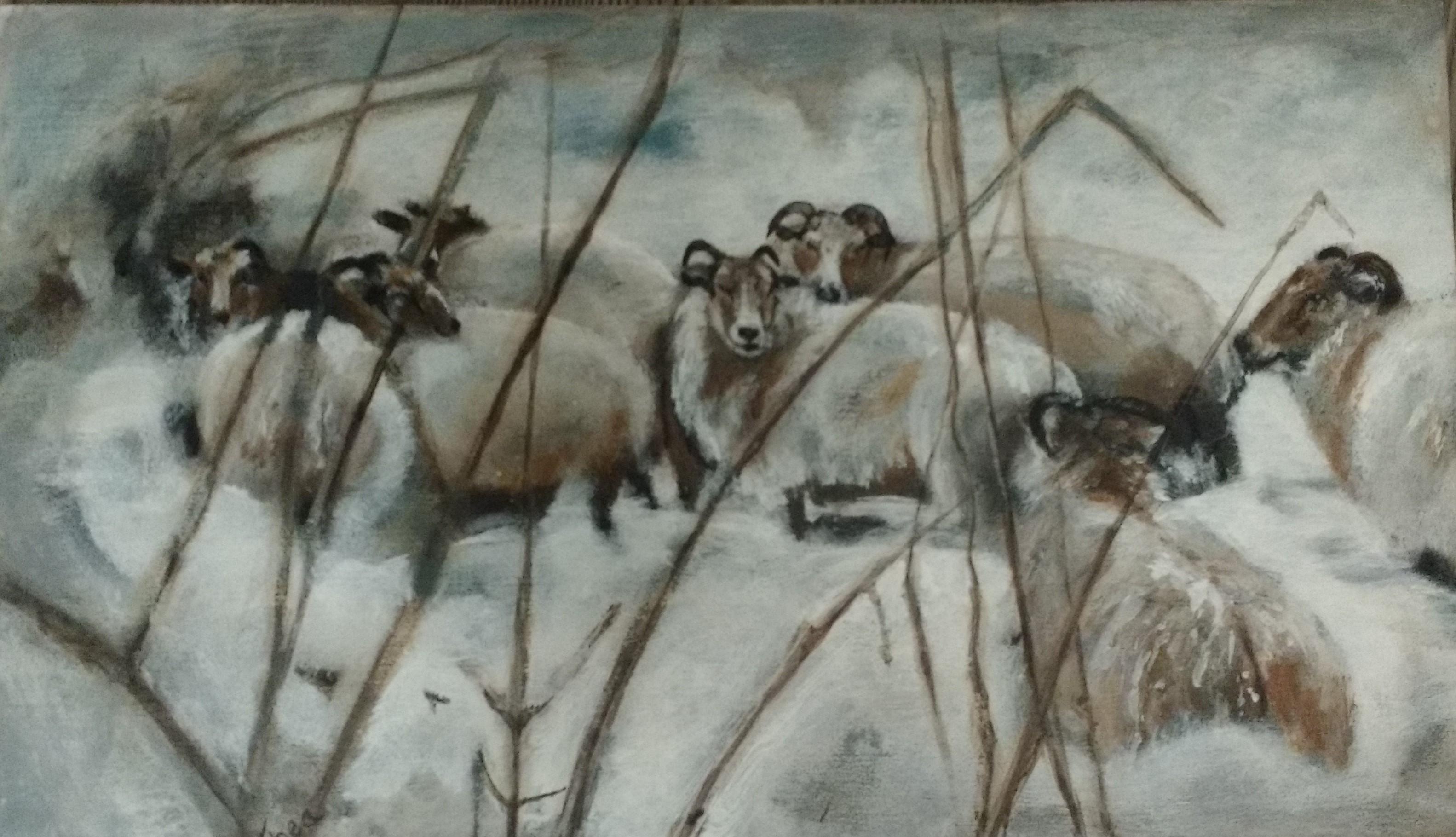 Schaapjes trotseren de winter
