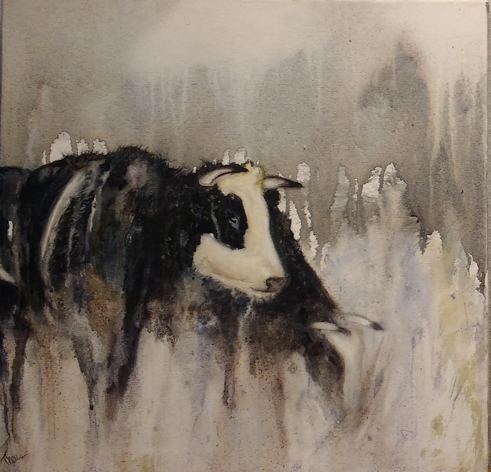 Blaarkop stieren