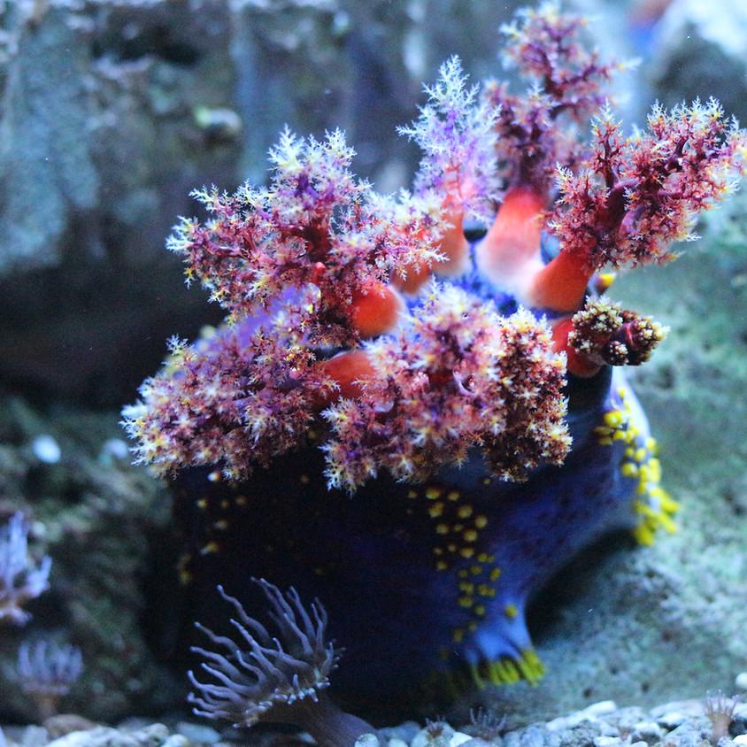 "POSTPONED Melissa Baffa: ""A Day in the Life: Exploring the Deep Sea Aboard the E/V Nautilus"""
