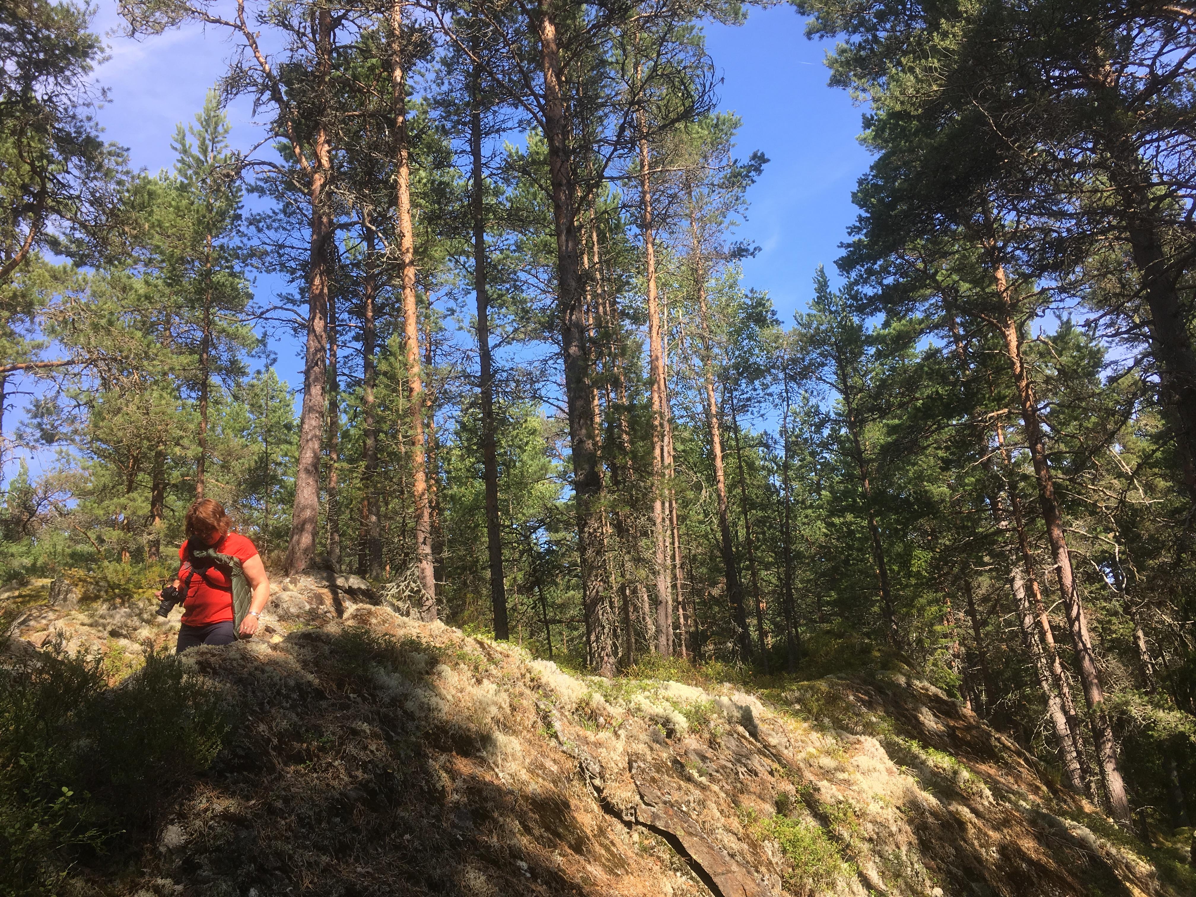 Hedenstugan - Hiking