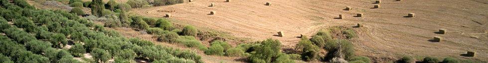 תמונת על של שדות הנגב