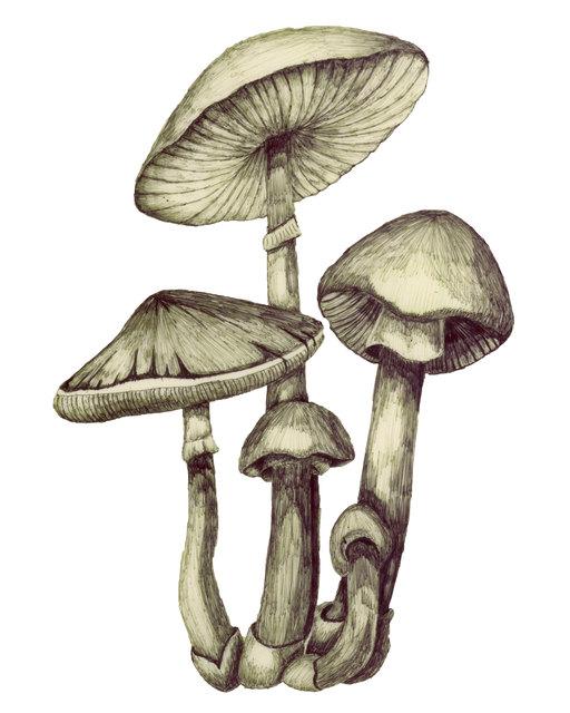 Magic Mushroom, Ballpoint Pen