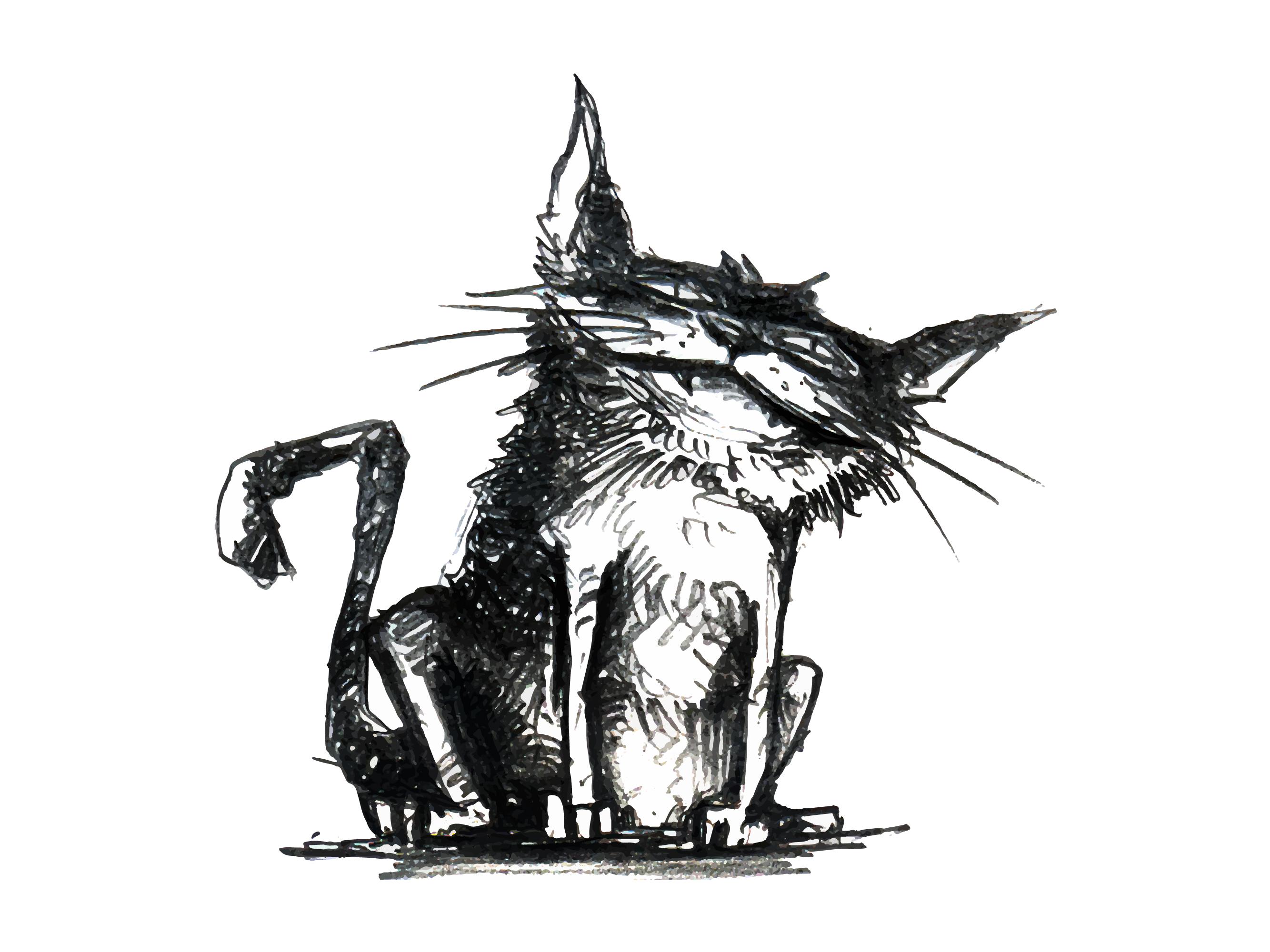 Sketchy Cat.jpg